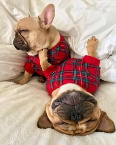 Frank & Oliver, French Bulldogs in Plaid Flannel Onesies for Christmas ❤