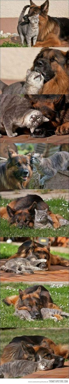 !  All of our cats and dogs have been Great friends. :-)