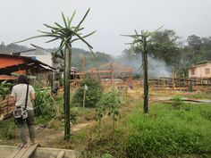 Gallery of The Soul of a Community: How a Young Architect Helped Resurrect a Village Longhouse in Borneo - 14