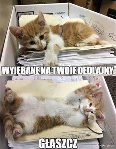Po co brać leki jak można brać mEmE # Humor # amreading # books # wattpad