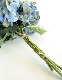 Green Hydrangea, Hydrangeas, Irish Blessing, Close Up Photos, Flower Images, Flower Fashion, My Favorite Color, Color Inspiration, Beautiful Flowers