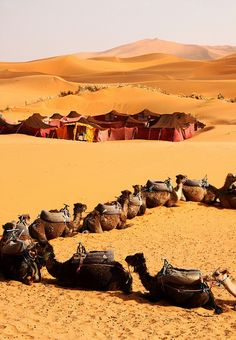 Camels and tents in Moroccan desert
