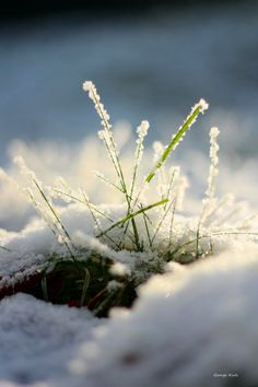 Glisten by =George-kirk on deviantART I Love Winter, Winter Day, Winter Is Coming, Winter White, Winter Season, Winter Christmas, Winter Schnee, Winter Beauty, Winter Photography