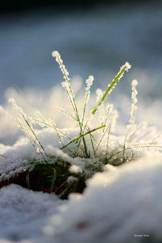 Brins d'herbe ....