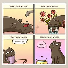 11 comics that sum up the wonderfully weird ways of cats