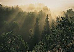 I love Finnland!                              Nuuksio National Park, Finnland
