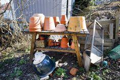 Välj en låg och bred kruka till ingefäran. Foto: Bertil Ericson/TT. Gardening, Indoor, Tips, Kitchen, Decor, Interior, Cooking, Decoration, Lawn And Garden
