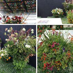 RHS Chelsea Flower Show 2014 - Highlights | Patternbank
