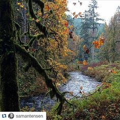 #Repost @samantensen with @repostapp Get featured by tagging your post with #talestreet Was I really just here? Life is amazing #Oregon #silverfalls #nature_perfection #talestreet #hikingadventures #hiking #adventure #hike #forest #mounts #falls #travel #travellove #travelogue #explore #exploreeverything #explorenature #closetonature #greenery #motherearth #exploreearth #twitter