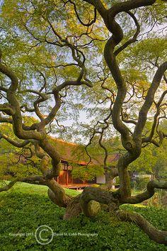 Shofuso Japanese Garden in Philadelphia, Pennsylvania. USA.