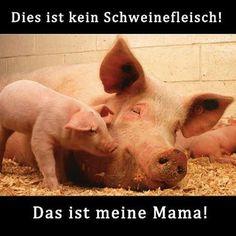 Das ist kein Schweinefleisch. Das ist meine Mama! GO VEGAN