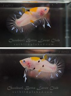 amazing coloration on this girl(?)