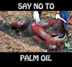 It is so important that we stop using products with palm oil. The Orangutan is going to be driven to extinction because their forests are being bulldozed and set on fire for palm oil plantations to take over. These beautiful animals truly deserve to live but every day they lose more and more of them.