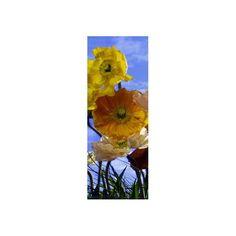 Fotomural Poppy 2-1257