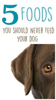 5 Foods that could harm your dog. Find out what foods to keep away from your dog.