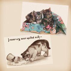 Kittens Box Milk 2 New 4x6 Vintage Postcard Image Photo Prints FN38 FN36 | eBay