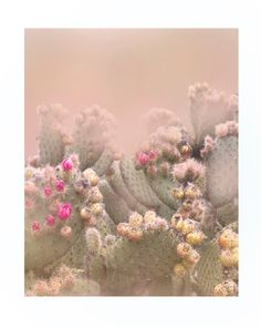 A beautiful fine art photograph of coastal California cactus. Allow 2 weeks for unframed prints. Allow 3-4 weeks for framed prints. Framed prints come with a 1.5 border. All prints come with a white border and are printed with archival inks on archival fine art paper. *Custom sizes are available! Please contact me if you are interested in a custom print for your home. These are beautiful photographs that also make a nice wedding or birthday gift!   Wilder:California is a photography project…