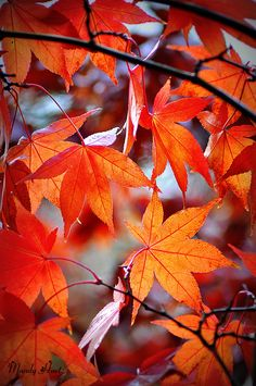 Iphone Wallpaper Fall, Nature Wallpaper, Autumn Leaves Wallpaper, Leaf Photography, Autumn Photography, Orange Aesthetic, Autumn Aesthetic, Autumn Scenes, Orange Leaf