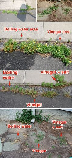 ❧ Free Way To Kill Weeds (Boiling Water: The Instant Weed Killer) #instantweedskiller