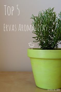 Top 5 de Ervas Aromáticas - O que plantar em casa mesmo com pouco espaço, na varanda ou na cozinha. Como escolher e como as manter.