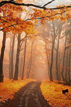 Golden Forest, Czech Republic