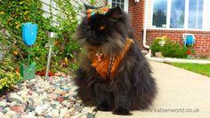 Pets Celebrate Halloween too!