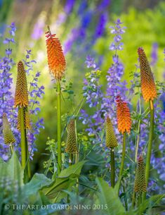 Pause for a second and think: when are you at your most creative in the garden? William Thomas, director and head gardener at Chant. Outdoor Plants, Outdoor Gardens, Plant Design, Garden Design, Beautiful Gardens, Beautiful Flowers, Garden Bed Layout, Blossom Garden, Cottage Garden Plants