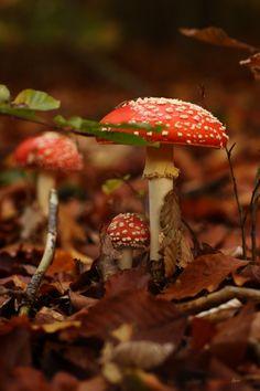 The Enchanted Garden Mushroom Art, Mushroom Fungi, Autumn Aesthetic, Nature Aesthetic, Wild Mushrooms, Stuffed Mushrooms, Mushroom Pictures, Enchanted Wood, Autumn Inspiration