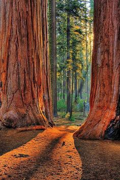 Sequoia National Park, near Visalia, California