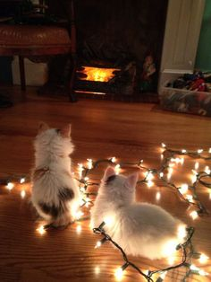 """""""My mom recently adopted two kitten sisters, Coco & Daisy. They're little bundles of joy and they've discovered the Christmas tree! They look like little ornaments in one of the pictures."""" -Ted S."""