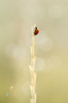 Lonely speck - A blade of grass, the ladybug's gateway to the whole world