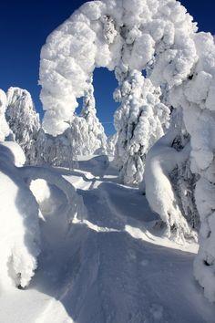 Photo by Tuomas Muurinen, winter Finland (Lapland, I bet). Winter Love, Winter Snow, Winter Christmas, Winter Photography, Nature Photography, Winter Schnee, Snow Pictures, Winter Magic, Snow Scenes