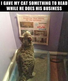 """I gave my cat something to read while he does his business."""