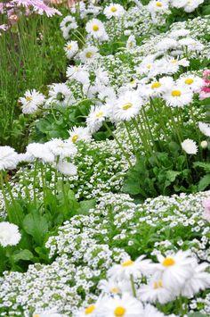 ~Kawachi Fuji Garden