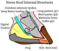 Equine health author Miriam Rieck shares some of her hoof-care knowledge developed through experiences with her favorite horse, Nan. Includes great ideas that can help you with your horse.