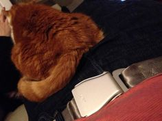 Our customers are flying #flybelts #aircraft #seat #belts #travel #cat #fun #fashion #accessory #airline