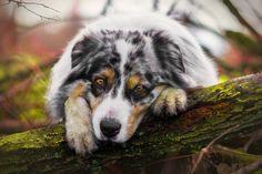 Spots, dog, cute, muzzle wallpaper