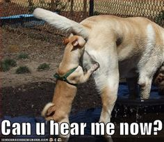 NOSE JOB !!!...that's soooooo nasty...but I can't stop laughing...hahahahaha...kd