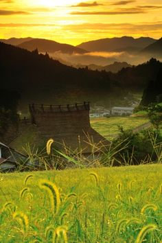 Rice fields at Hase, Osaka, Japan