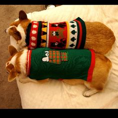 With a pair of sweaters, this duo is ready for the next party! (photo credit: @corgnelius)
