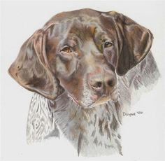 Google Image Result for http://www.daynethomas.com/ColoredPencil/GermanShorthairPointer-Colored-Pencil.jpg