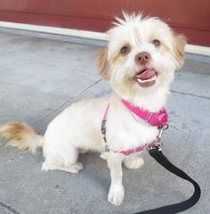 Maureen and Kerry (ID: A385075/A385077) are  available at the San Francisco SPCA.