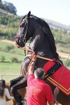 Spettacolo Equestre Pettino Umbria 2013