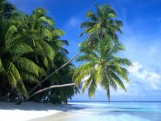 palm-paradise-maldive-islands  www.TheWallpapers.org