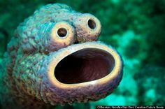 Meet the Cookie Monster sea sponge! Spotted on the reefs of Curacao in the Caribbean. @Hope Kerr