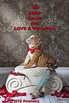 Keep calm and Love a bulldog! #Buldog