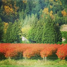 Fall in the beautiful Fraser Valley, BC.