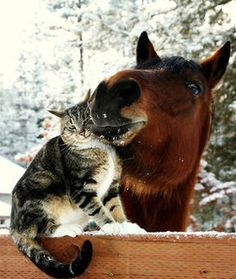 10 Unlikely Valentine's Day Animal Couples - Pets Tips & Advice | mom.me