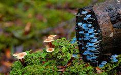 zoe in wonderland: On Reading Mushrooms