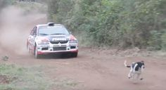 Chill Dog Miraculously Avoids Getting Hit By Rally Car -  Chill Dog Miraculously Avoids Getting Hit By Rally Car This pup was just enjoying a leisurely walk along a nice dirt path when some jerk racecar driver tried to run him over. But the dog understood just where he needed to be to stay alive. Fecha: August 29 2016 at 12:13PM via Digg: http://ift.tt/2c4bJcn - Sigueme en mi página de Facebook: http://ift.tt/1Unt1E1 - Etiquetas: Comico Curiosidades Digg Diversion Entretenimientos Funny…